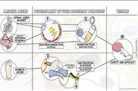 Ricerca medica, una mappa online a fumetti spiega le innovazioni